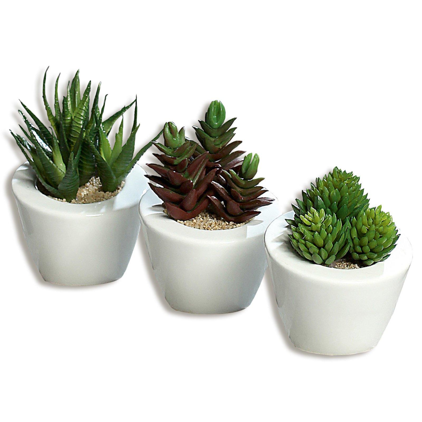 Sukkulenten - Kunstpflanze - 3-fach sortiert