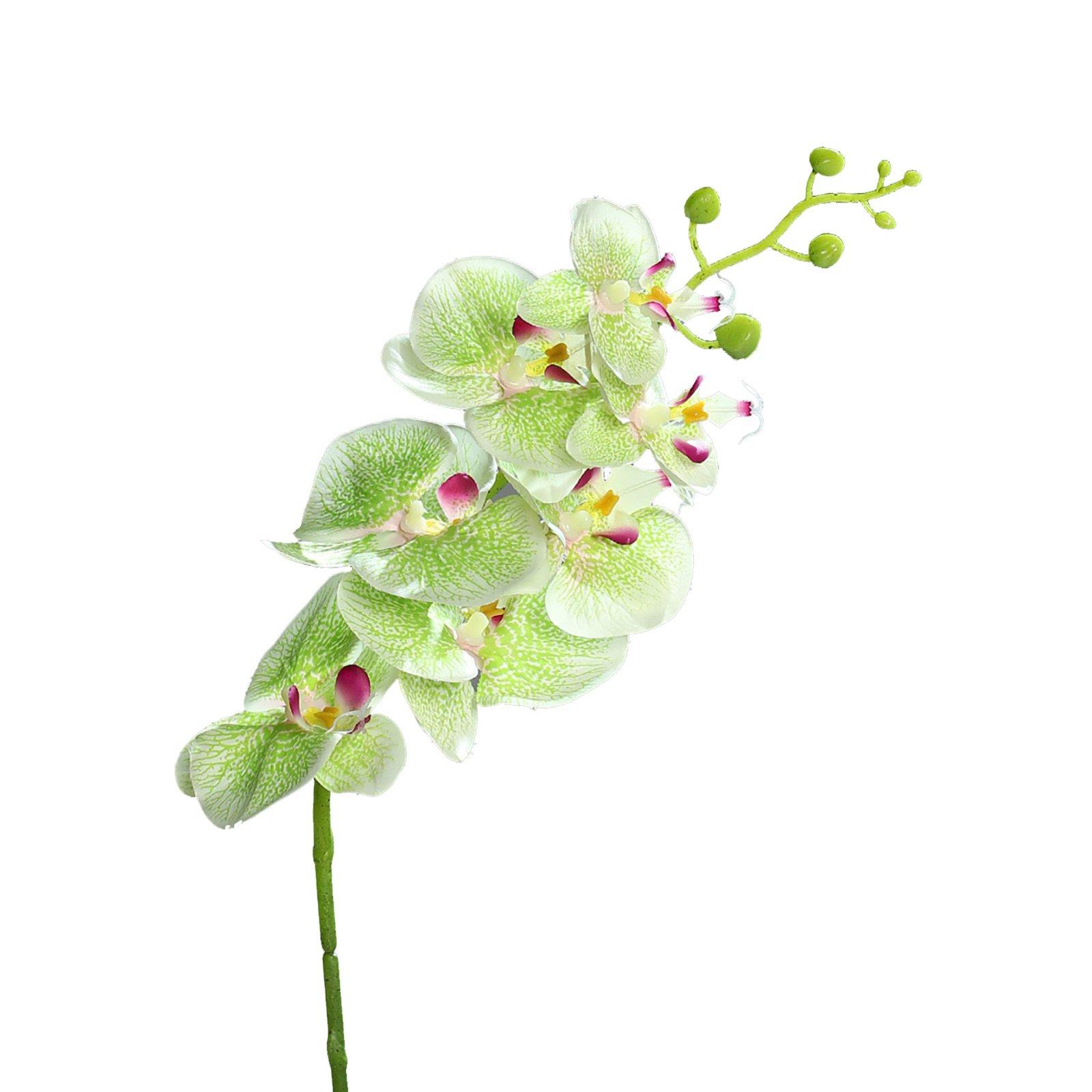 Orchidee-Phalaenopsis - Kunstpflanze - grün