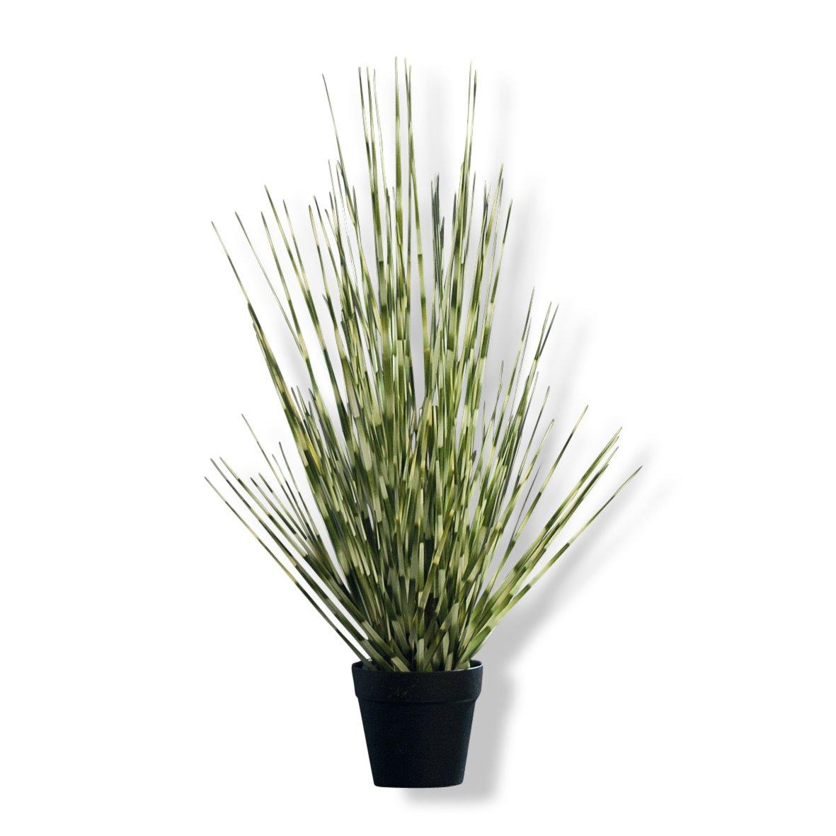 zebra wohnzimmer:Zebra-Gras