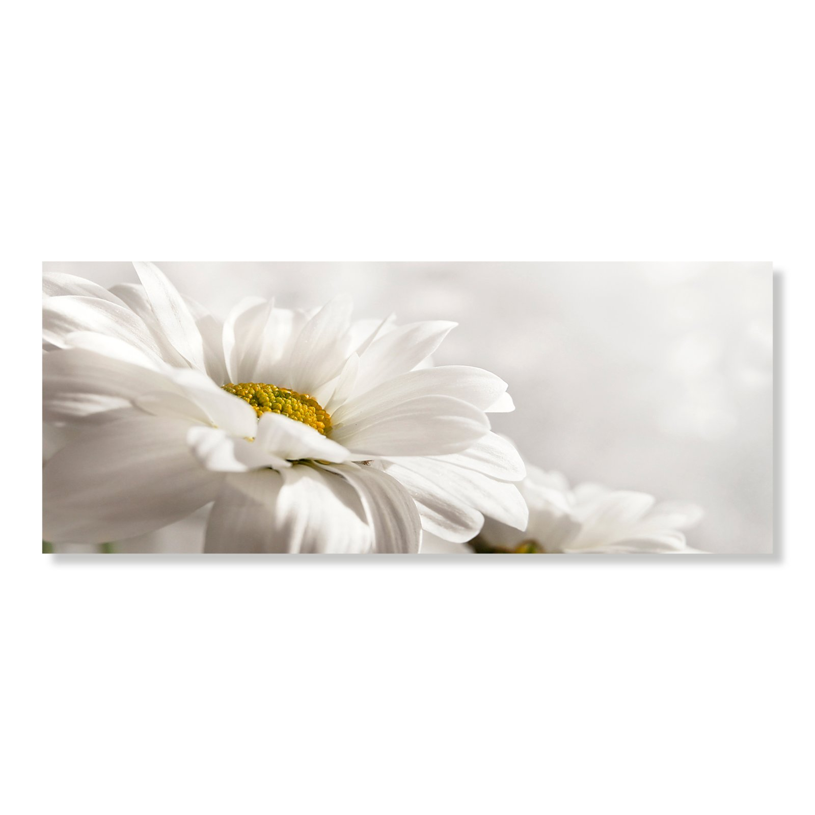 Acrylbild glasbild blume bilder gem lde deko for Acrylbilder wohnzimmer